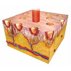 Dermatologo Torino – Skin Resurfacing metodo ablativo frazionale